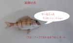 080905_madaichigyo