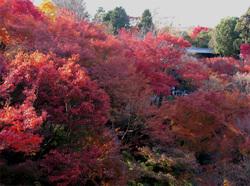 081201_tofukuji_01